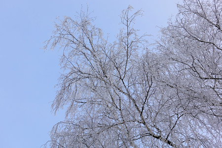 Beautiful winter landscape. Frozen trees in a cold forest in winter against the sky. Christmas background