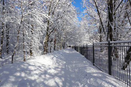Winter Park. The road and trees are covered with snow. Iron fence and trees in the snow. Winter sunny frosty day.