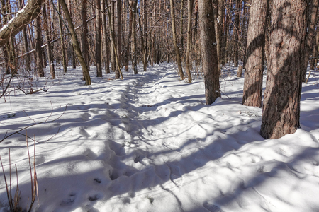 Footpath on the snow in the winter forest. Sunny day. Winter background. Stok Fotoğraf