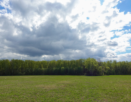 Landscape cloudy sky and green field. Russia.