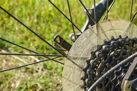 A cricket sits on the spokes of a bicycle wheel. Close-up