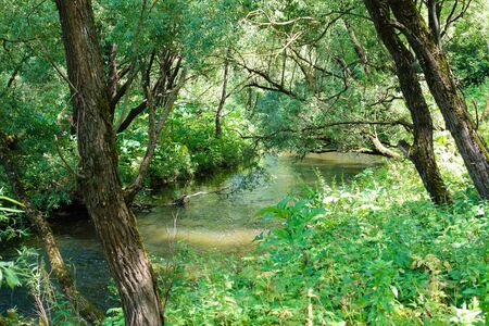 River in the forest. Water between the trees. Green Forest. Summer time. Russia Stock Photo
