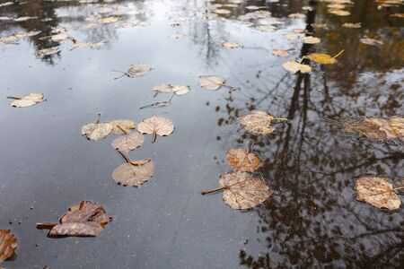 Autumn leaves in a rain puddle. Autumn concept