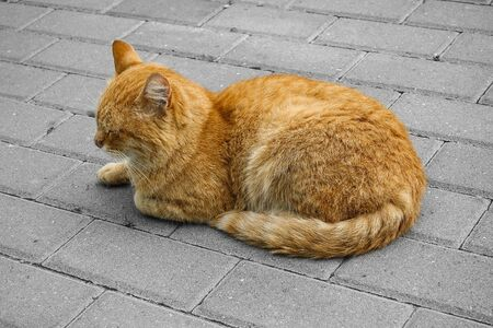 A cute ginger stray cat is resting. bleached background Фото со стока