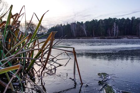 Winter landscape. The frozen lake is covered with new clean ice. Plants frozen in water. Stok Fotoğraf