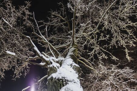 Night shooting. A tree covered with snow from below. Stok Fotoğraf