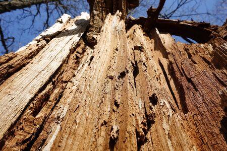 Broken tree close up. The texture of a broken tree.