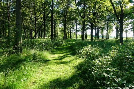 Spring nature. Beautiful landscape. Forest with green grass and trees. Calm background 版權商用圖片