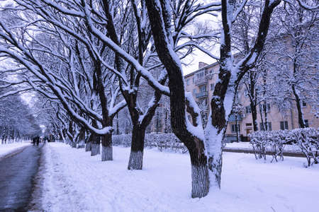 Winter in the evening park in the city