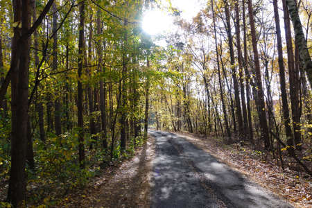 The road in the forest. Sunny day. Tall trees and a road.