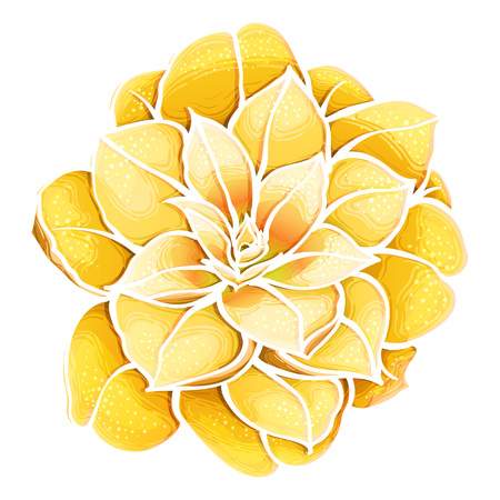 Exotic yellow flower. Camellia. Paradise flower. Stock Photo