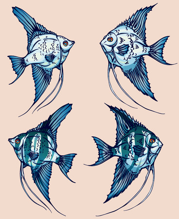 A beautiful hand-drawn illustration with angelfish for design