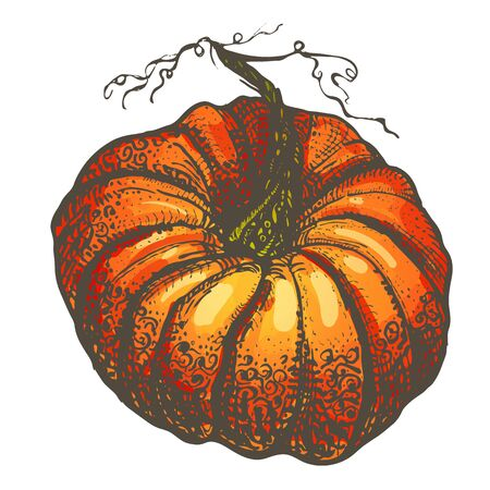 hand drawn bright orange pumpkin with a graphic ornate on a white background.Thanksgiving Symbol. Halloween Decorations
