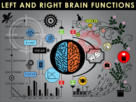 brain function: Left and right brain functions, Cerebral function. Vector and Illustration, EPS 10.