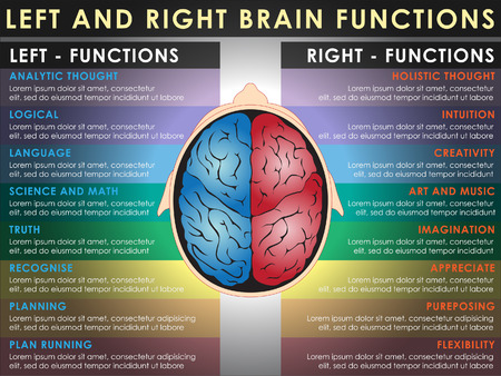 cortex: Left and right brain functions, Cerebral function. Vector and Illustration, EPS 10.