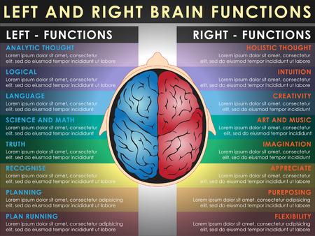 Les fonctions du cerveau gauche et droite, la fonction cérébrale. Vector et Illustration, EPS 10. Vecteurs