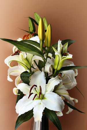 earth tone: a fragment of white Lilies are on earth tone background. Stock Photo