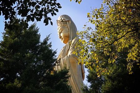 quan yin: Golden Female Goddess Chinese Buddha (Quan Yin) Statue in the big garden.