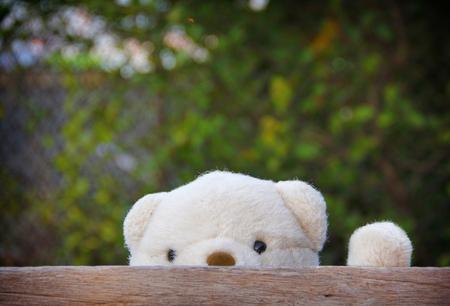 Leuke teddybeer verbergen door houten plank. Stockfoto
