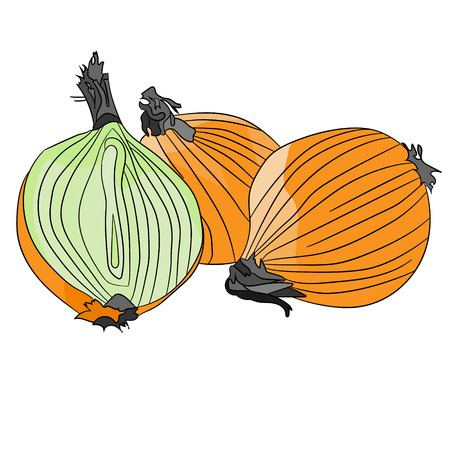 useful: Beautiful, golden, useful onions Illustration