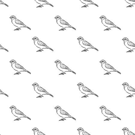 sparrow: pattern sparrow Illustration