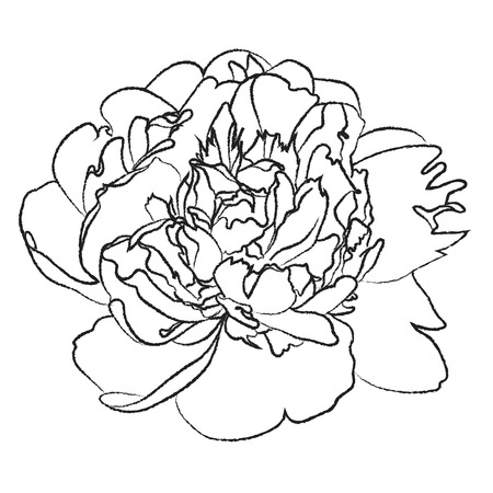 peony black: Black and white illustration of a large peony flower