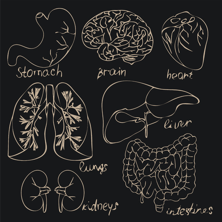 encyclopedias: The bodies of human illustrations for books, encyclopedias, scientific and medical aids, brochures on a black background Illustration