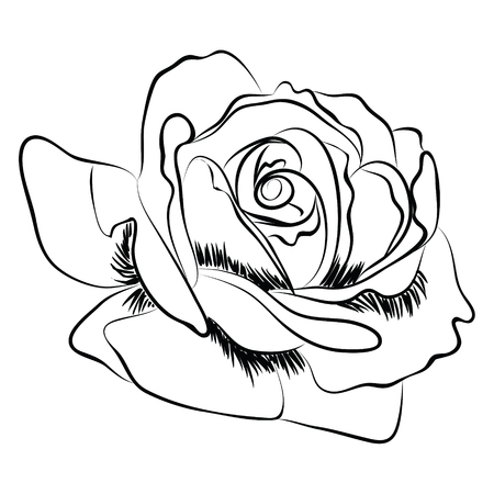tea rose: Illustration of a tea rose garden Illustration