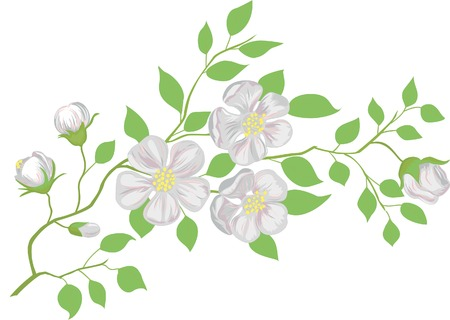 appletree: The blossoming apple-tree branch.