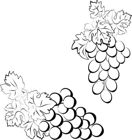 Vector set des grappes de raisin. Deux grappes de raisin effectués sous la forme d'une esquisse. Banque d'images - 40843244