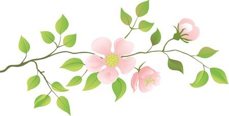 flowering: Flowering peach branches. Vector illustration. Illustration