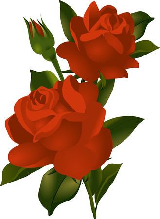 Ein Strauß roter Rosen. Vektor-Illustration. Standard-Bild - 40843301