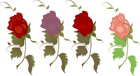 differently: Vector illustration of a set of differently colored roses on a white background. Illustration
