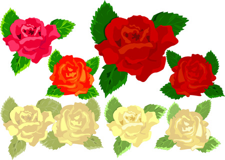 Set roses dyed in various colors. Vector