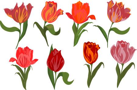 izole nesneleri: set of tulips Isolated objects. Çizim