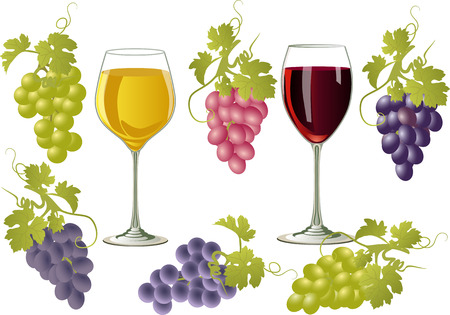 red grape: Two glasses with white and red wine on a white background and a bunch of grapes of different varieties.