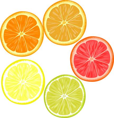 lemons: Slices of different citrus fruits. Orange, grapefruit, lemon, lime.