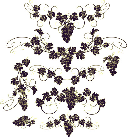 wine grape: Design elements with bunches of grapes and vines in vintage style.