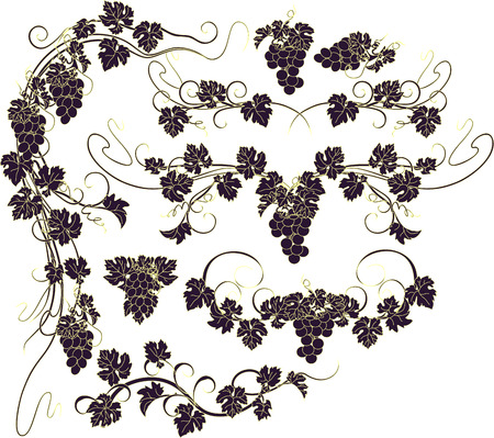 grapes on vine: Design elements with bunches of grapes and vines in vintage style.