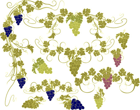 grape: Design elements with bunches of grapes and vines in vintage style.