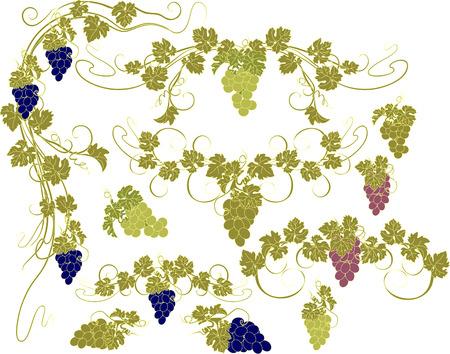 grapes: Los elementos de dise�o con racimos de uvas y las vides en el estilo vintage.