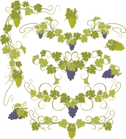 grape juice: Vector design elements in vintage style with vines.