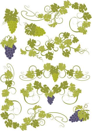 Léments de conception vecteur de style vintage de vignes. Banque d'images - 43929915