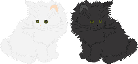 fluffy: White and black fluffy cats. Illustration