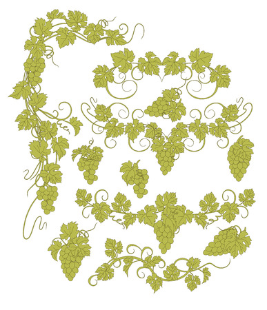 bunches: Design elements with bunches of grapes in vintage style.