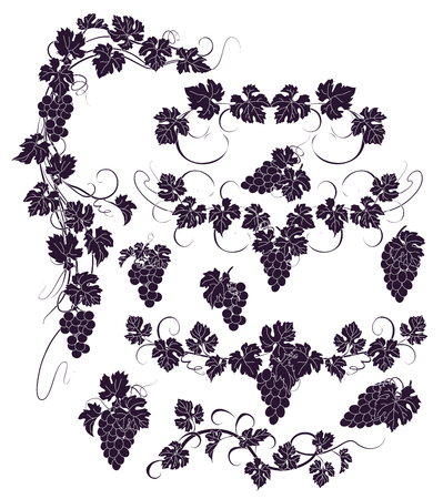Design elements with bunches of grapes and vines in vintage style. Vector Illustration
