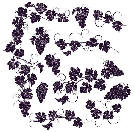 Design elementen met trossen druiven en wijnstokken in vintage stijl. Stock Illustratie