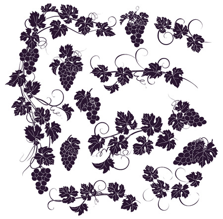 Design elements with bunches of grapes and vines in vintage style. Stock Vector - 52008068