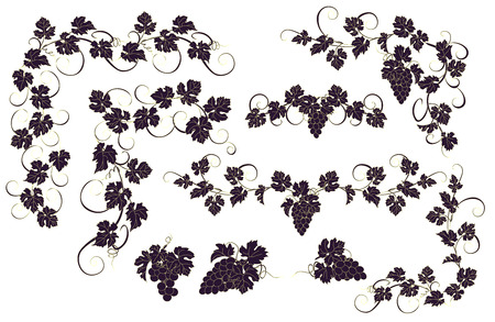 Vector design elements in vintage style with vines. Vector Illustration