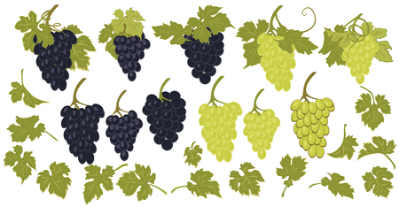 grape leaves: Vector set of grapes and grape leaves. Illustration